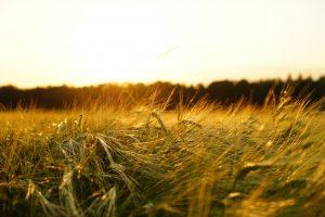 Uprawy rolnicze
