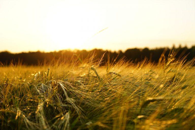 Zamień uprawę podłużną na pasową – innowacyjne technologie w rolnictwie